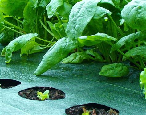 Weed Control Fabric Vegetable Garden Landscaping Weed Grass Killer For Vegetable Gardens