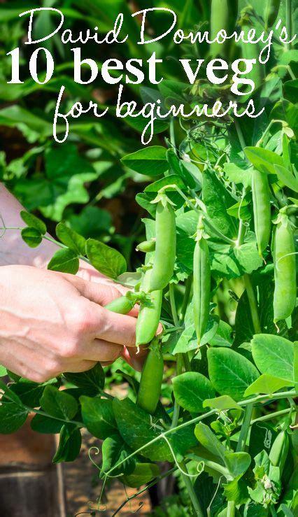 easy  grow vegetables  beginners