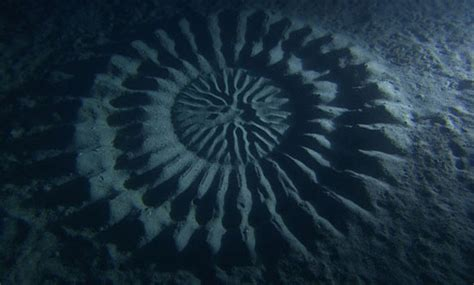 mysterious underwater crop circles discovered off the