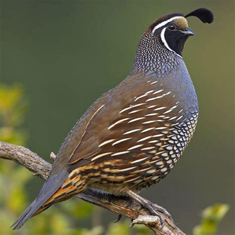 bird california
