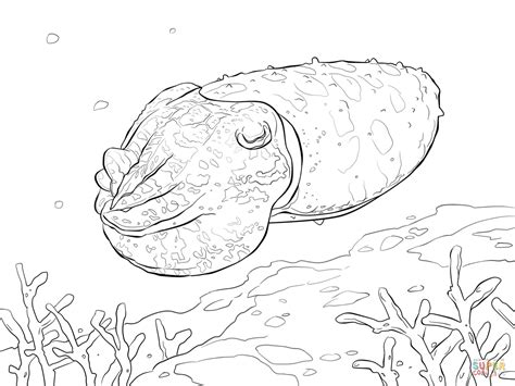 broadclub cuttlefish coloring page free printable