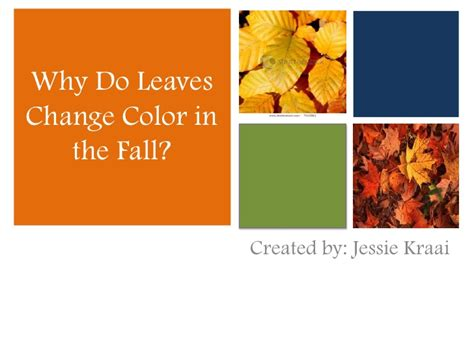how do leaves change color why do leaves change colors