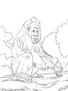 gorilla family coloring page western lowland gorilla coloring page supercoloring com