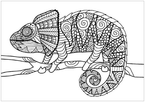 chameleon  branch chameleons  lizards justcolor