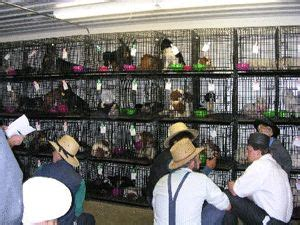 amish puppy mills pa 38 best images about puppy mills on shelters pets and puppys