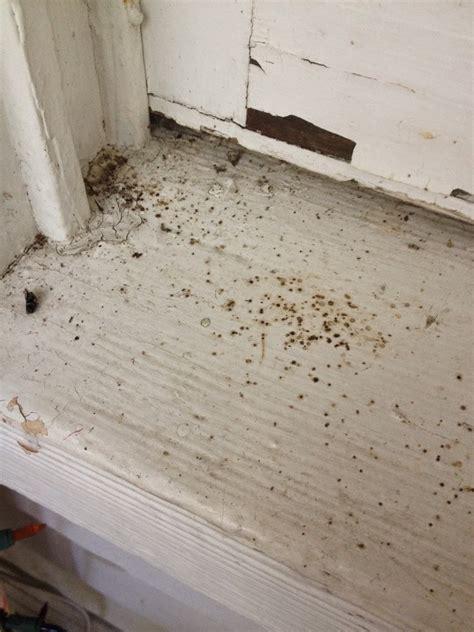 poop houses house fly poop