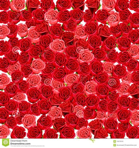 red and pink wallpaper of red and pink roses stock image image 19379161
