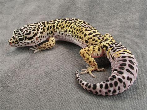 leoparden deko a rock in the desert september 2013