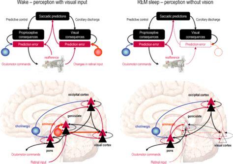 figwaking  dreaming consciousness neurobiological