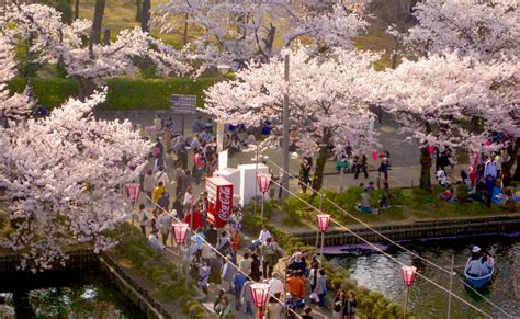 when did japan give us cherry blossoms 100 when did japan give us cherry blossoms when