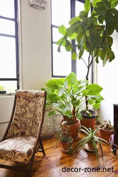 large indoor plants ideas   green corner