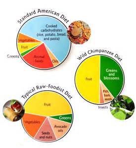 standard diet vs raw food diet vs chimpanzee diet conscious nourishment