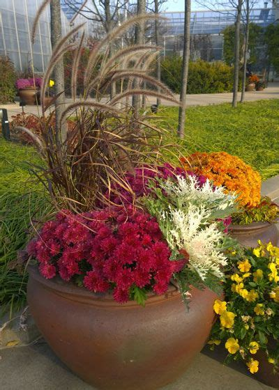 refresh containers  cool fall flowers  foliage