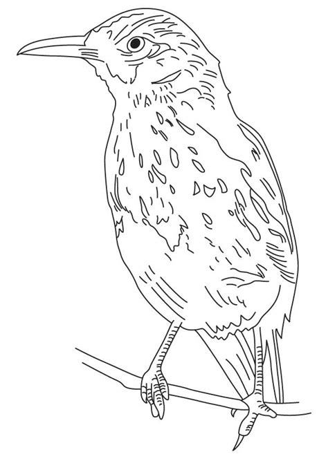 bold brown thrasher coloring page download free bold