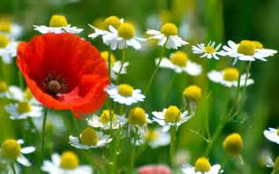 flower images flowers wallpaper 2560x1600 38183