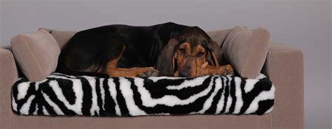 divano gatto tipo di divano per il tuo o gatto