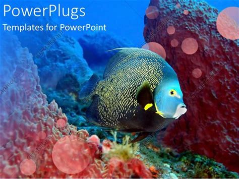 Powerpoint Template Glowing Fish Swimming Over Coral Reef In Water Setting 26596 Coral Reef Powerpoint Template Free