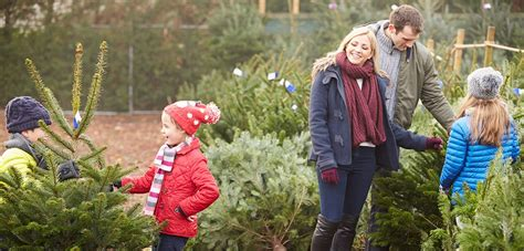 choosing transporting and caring for a live christmas tree
