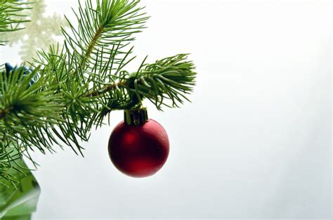 christmas branch free stock photo public domain pictures