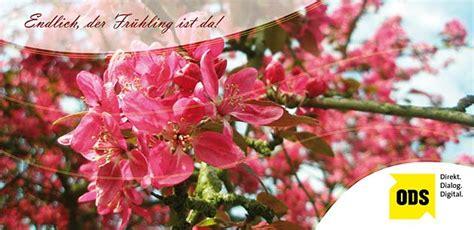 Individuelle Postkarten Drucken by Individuelle Postkarten Ods Office Data Service Gmbh