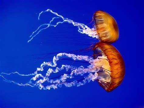 sea animal 2 jellyfish the animals kingdom