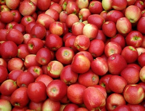 apple china exporters eye chinese apple market