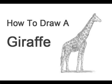 how to draw a giraffe doodle how to draw a giraffe