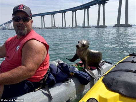 boat dog 10 hours baby sea lion jumps onto vincent fejeran s kayak and
