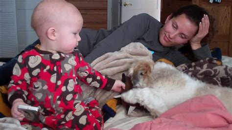 shih tzu and babies baby plays with shih tzu