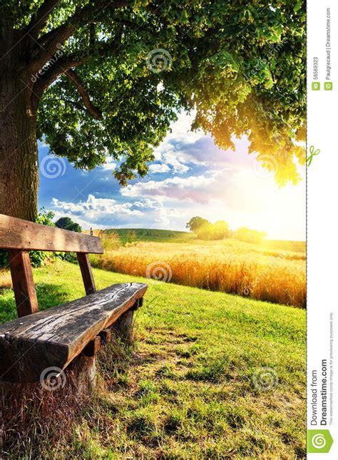 beautiful summer landscape  wooden bench stock photo