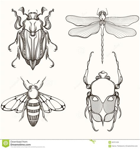 hand drawn engraving sketch of scarab beetle may bug bee