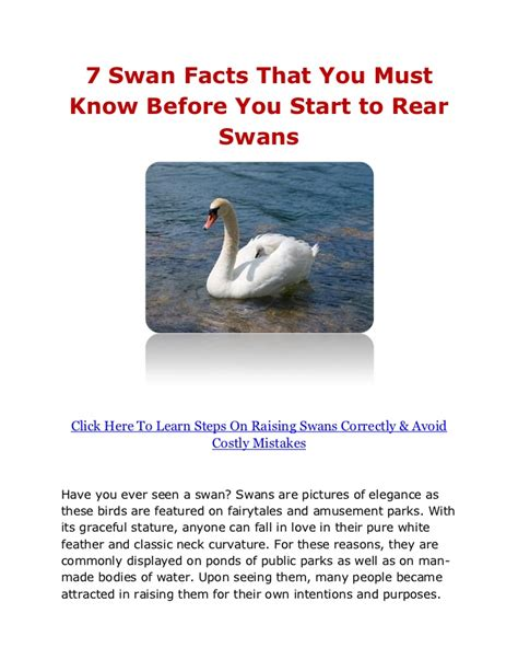 7 Playlists You Must by 7 Swan Facts That You Must Before You Start To Rear Swans