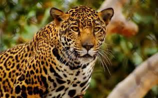 Jaguar Delaware Fondos De Escritorio En Buena Calidad Taringa