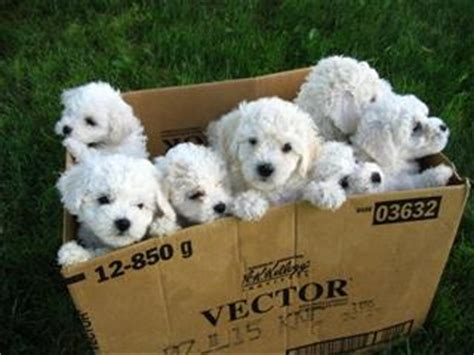 puppies in a box top 10 pictures of puppies in boxes