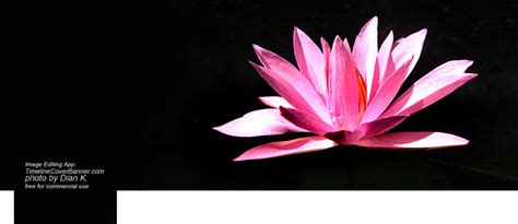 lotus flower cover photo quotes maker lotus flower with black background