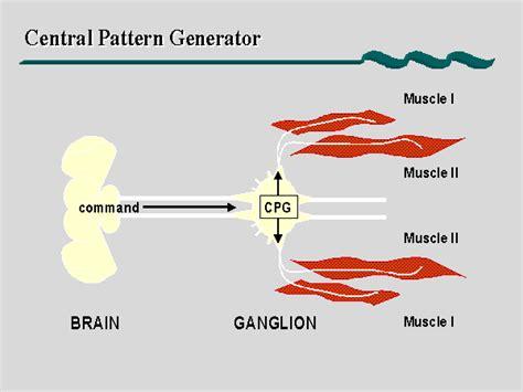 central pattern generator leech hj 228 rnfysik en blogg om hj 228 rnan och l 246 pning 214 ka takten