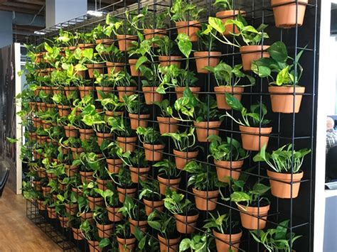 vertical garden racks inscape indoor plant hire