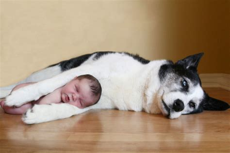puppy sleeping with baby dogs are more comfortable to sleep with than pillows and here are 18 reasons why