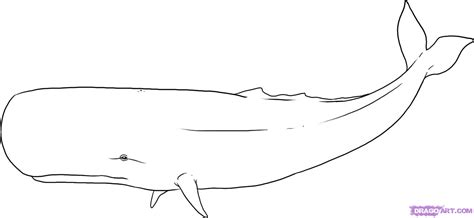 How To  Draw A Blue Whale sketch template