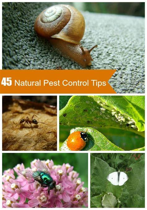 45 Tips For Natural Garden Pest Control Organic Ant Killer For Vegetable Garden
