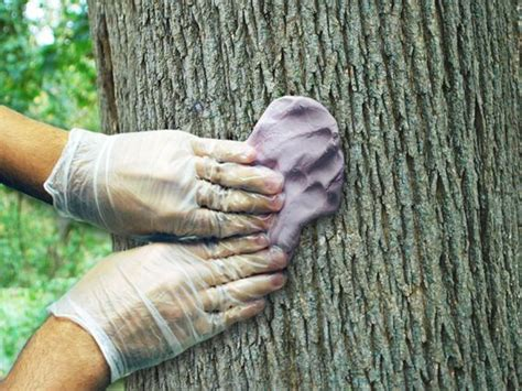 how to make a fake tree reproducing tree bark texture using poyo 174 silicone putty