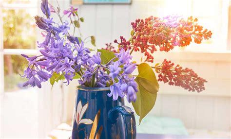 fiori primaverili da vaso fiori primaverili da vaso 10 fiori per portare la