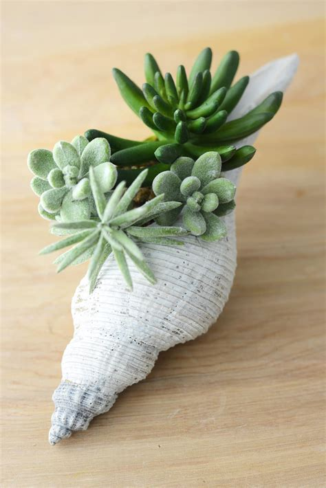 Nautical Home Decor faux succulents in shell 8 quot