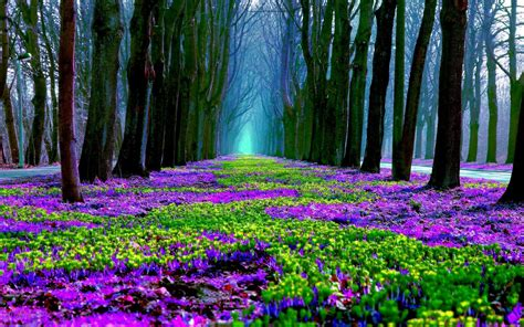 wallpaper abyss spring spring flowers in forest full hd wallpaper and background