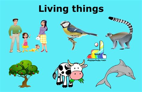 living things non living things living and non living things what makes difference