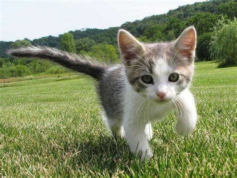 imagenes de gatitos blancas tiernas nombres para gatos originales 161 escoge el tuyo