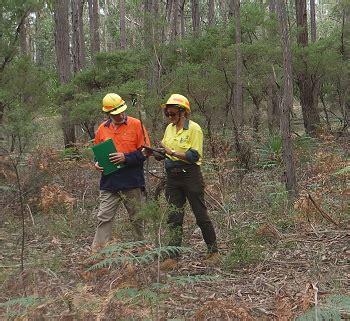 harvesting plantations in tarkeeth state harvesting plantations in tarkeeth state forest forestry