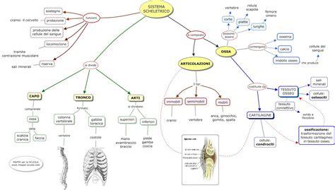 posizione organi interni corpo umano mappa organi interni 28 images convegno rolfing una