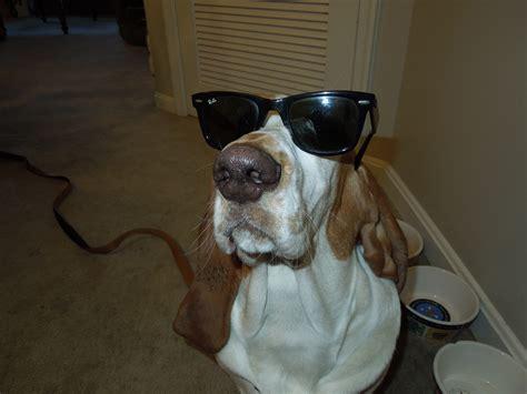 hound names hound