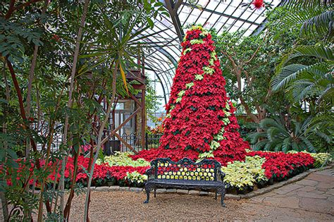 christmas tree farms birmingham al birmingham botanical gardens poinsettia tree flickr photo